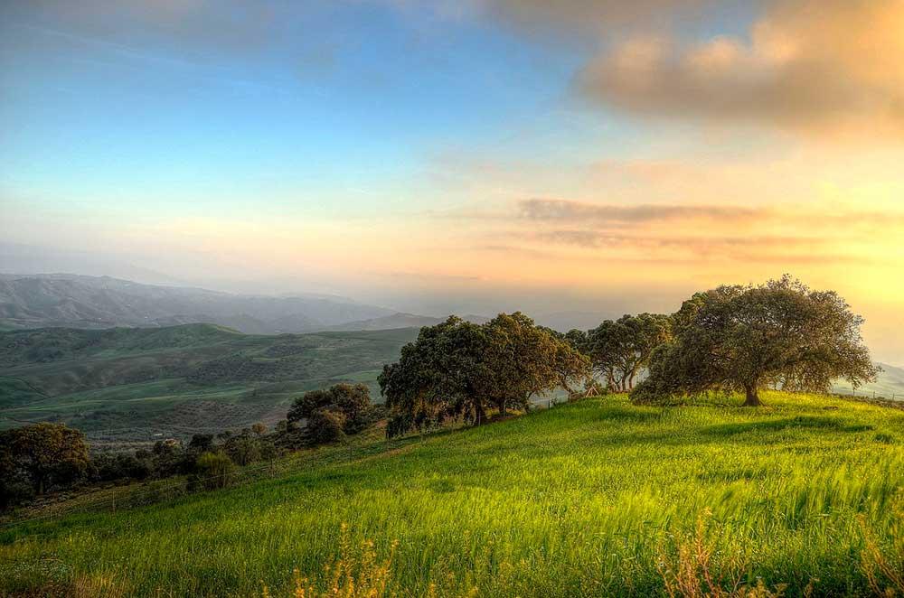 Andalucía es tierra de olivos