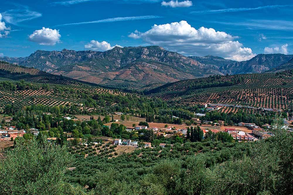 La mejor tierra para olivos, Andalucía