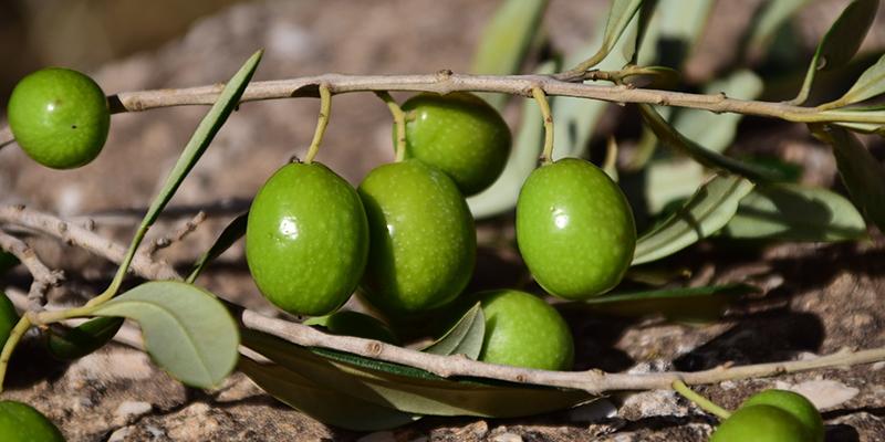 Aceitunas, un snack por el que no pasan los años
