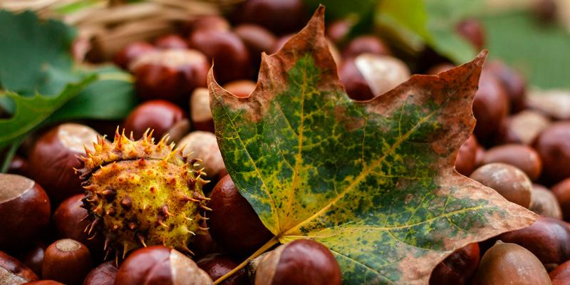 Alimentos de otoño con el sabor de Fragata
